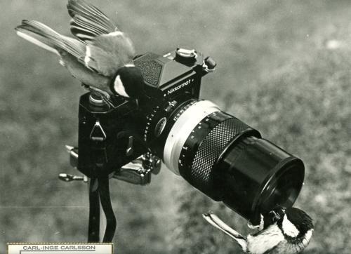 Carl-Inges foton(5)