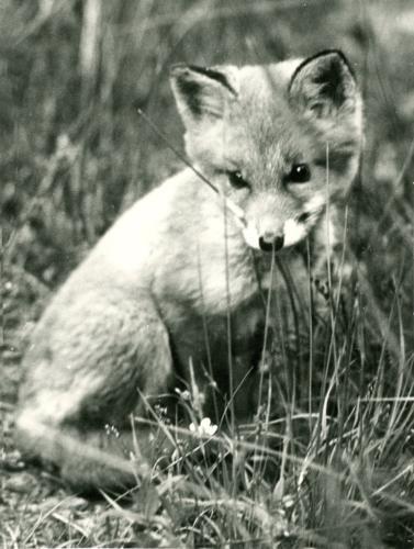 Vilda djur (1)